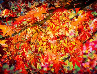 Tis the Season for Thankfulness